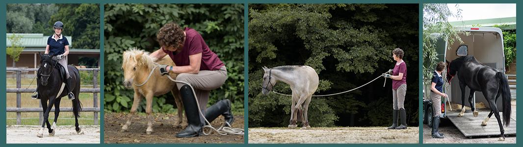 Thinking Horse - Kate Farmer